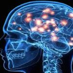 Prevent Alzheimer's, Parkinson's and Multiple Sclerosis by Feeding Your Brain