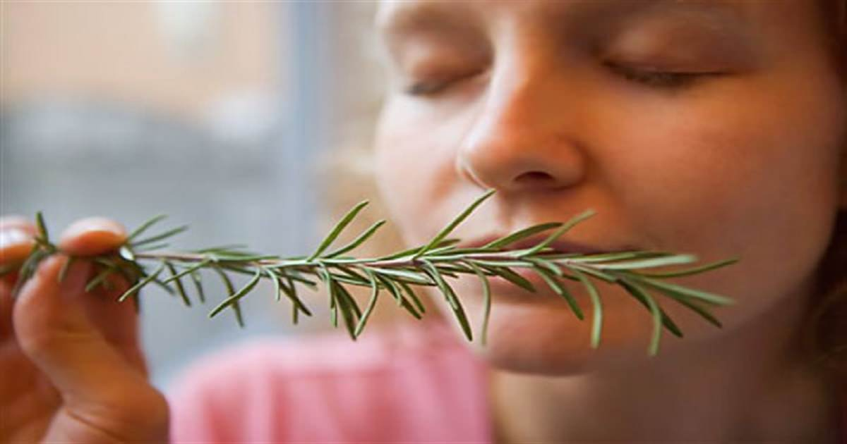 According to scientists, sniffing rosemary will improve your memory. Here's how