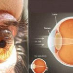 This Ingredient Increases Vision by Up to 97%