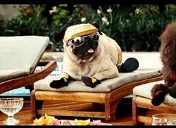 doggie-movie-star