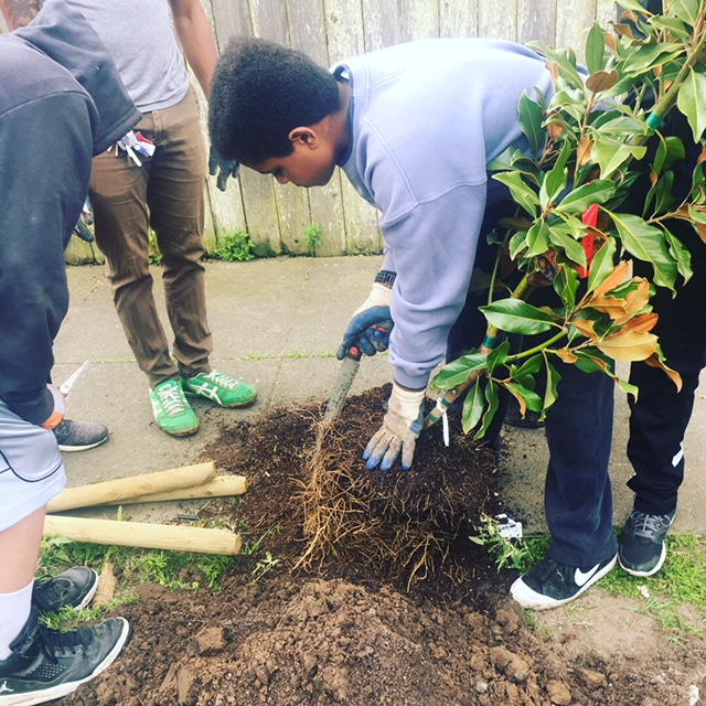FUF Volunteers Planting A Street Tree.