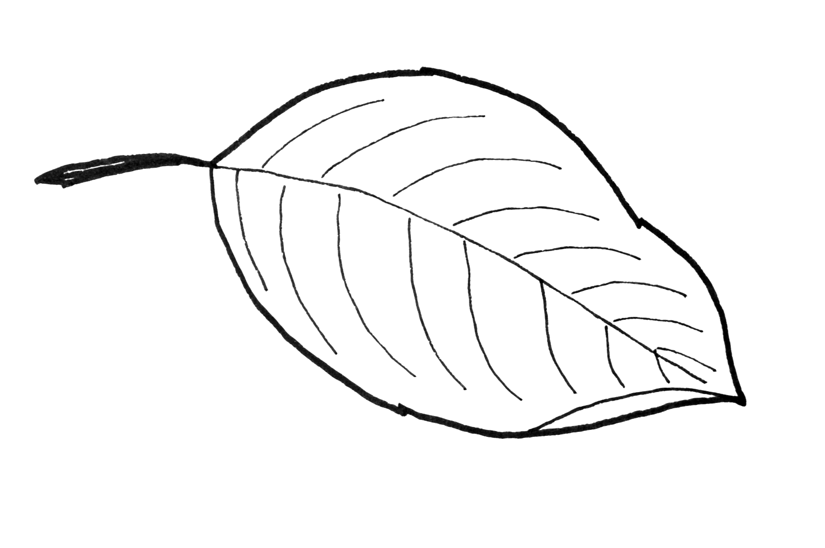 Leaf Patterns To Cut Out