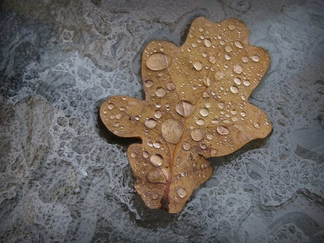 just an oak leaf