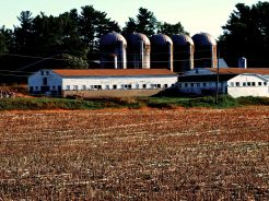 Tully Farm; Dunstable, MA