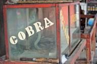 Cobra a Chinatown - Jakarta