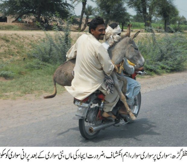 Donkey travelling at bike in Pakistan