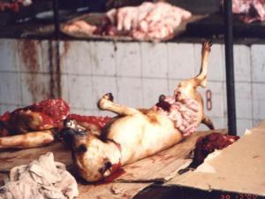 meat dog in pakistan