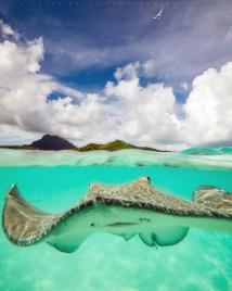 Mind-blowing Underwater