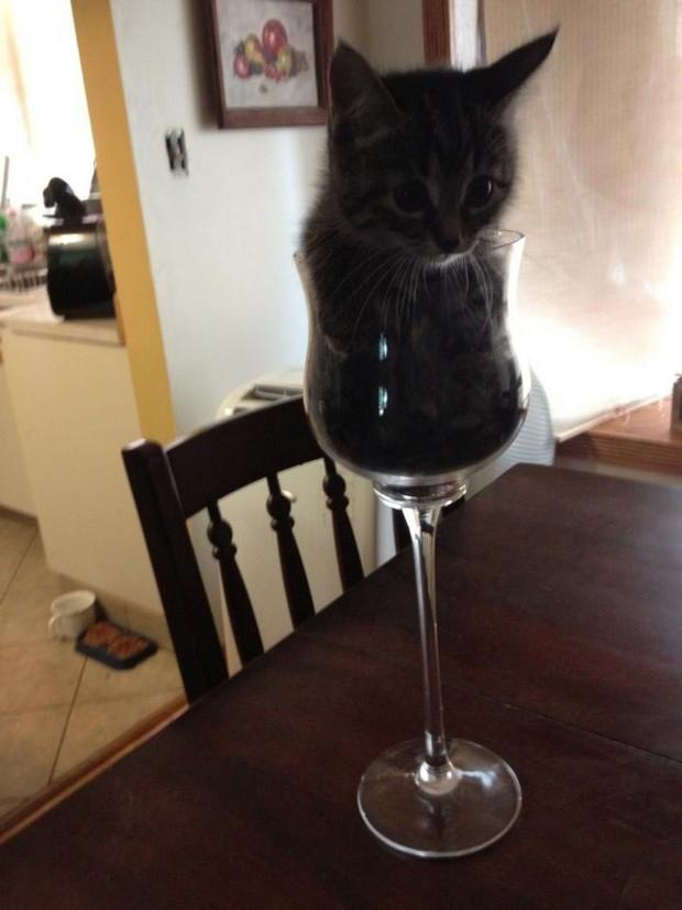 If It Fits I Sits 18 Hilarious Photos Proving That Cats