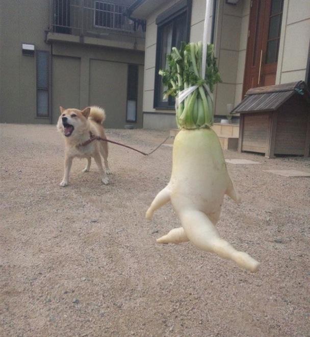 18 Funny Shaped Vegetables Pretending To Be Something Else