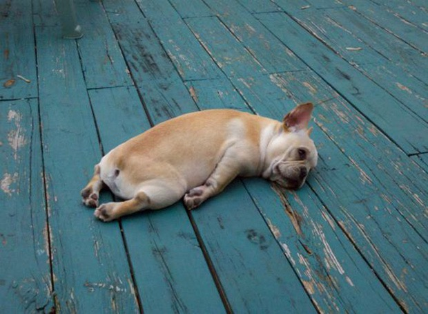 Image result for animals who just gave up