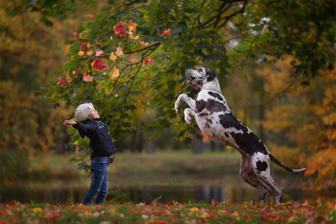 Photographer Takes Pictures Of Huge Dogs Playing With