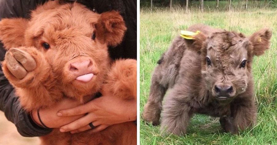 19 Photos Proving That Cows' Cuteness Is Highly Underestimated