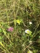 12 Wild Flowers