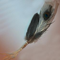 Peacock Prayer Feather