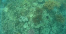Korallen und Nemo