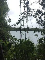 Regenwald Cairns