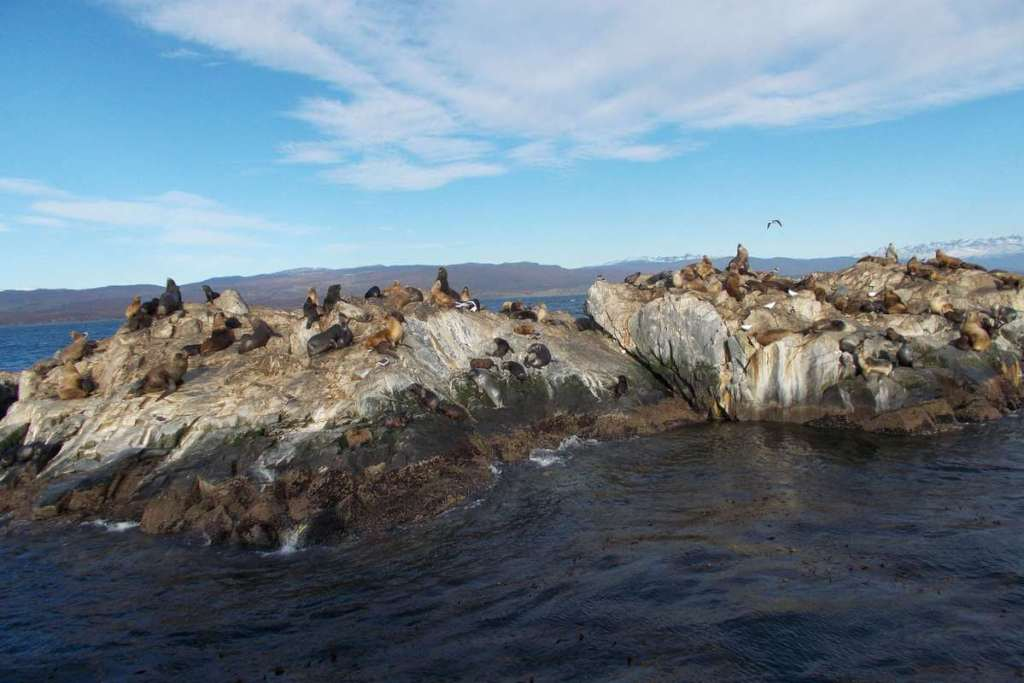 Seals covering a large rocky island