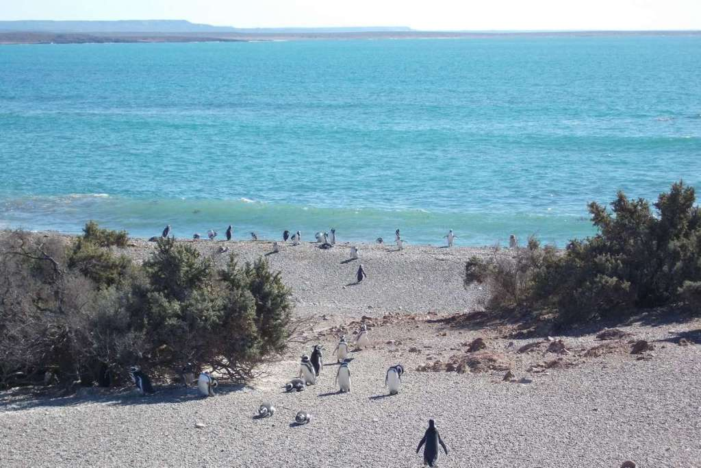 Penguins swimming in the ocean in Puerto Madryn
