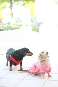 ワンコ 犬 いぬ 愛犬 大好き 結婚式に参列