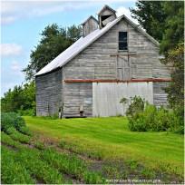 Barn in field, Grundy County, Illinois.