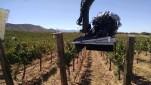 Filming in a wine vineyard