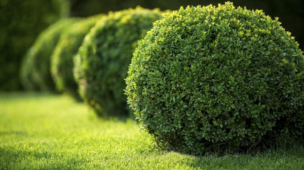 lawn care commercial landscaping