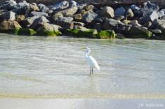 Ponce de Leon Inlet, FL