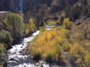 Walker River in Autumn
