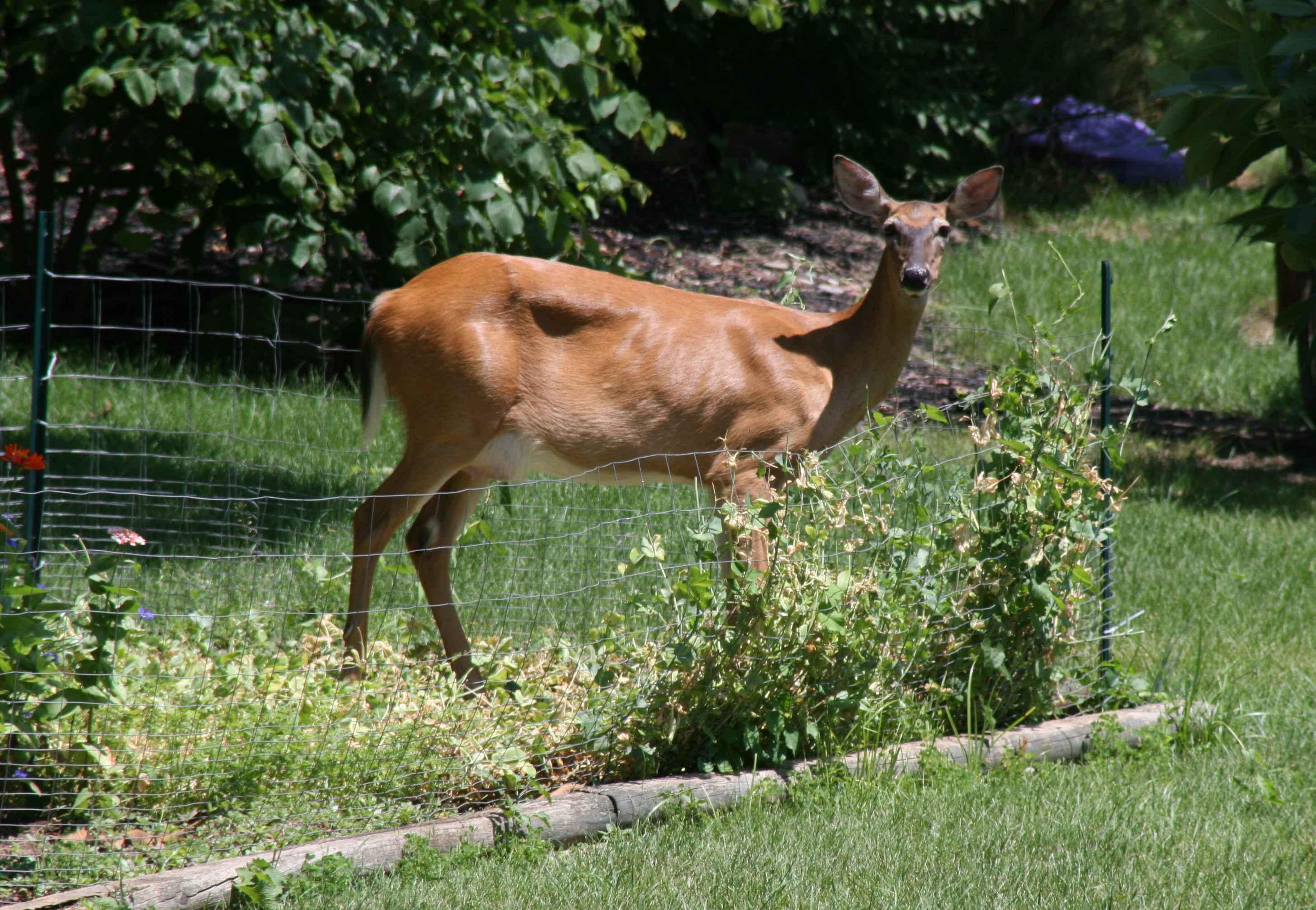 deer_garden_edit_sm