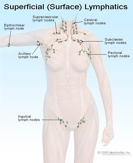 """Image text: """"Superficial (Surface) Lymphatics"""" lymph nodes at outside of elbow, inside of armpits, down both sides of the neck, across collar bones, and down through chest into breasts."""