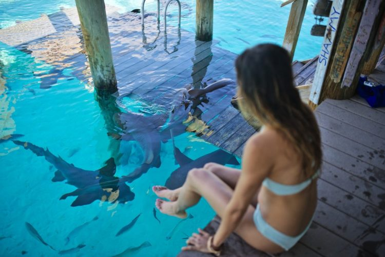 cuppajyo_sfblogger_style_fashion_travelblogger_bahamas_exumas_nursesharks_swimmingwithsharks_sandbars_toripraver_bikinidotcom_showmeyourmumu_starfish_swimwear_17