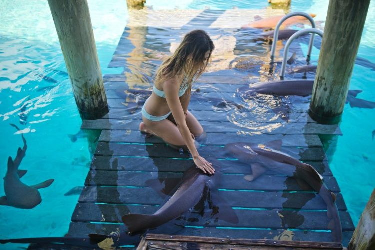 cuppajyo_sfblogger_style_fashion_travelblogger_bahamas_exumas_nursesharks_swimmingwithsharks_sandbars_toripraver_bikinidotcom_showmeyourmumu_starfish_swimwear_18