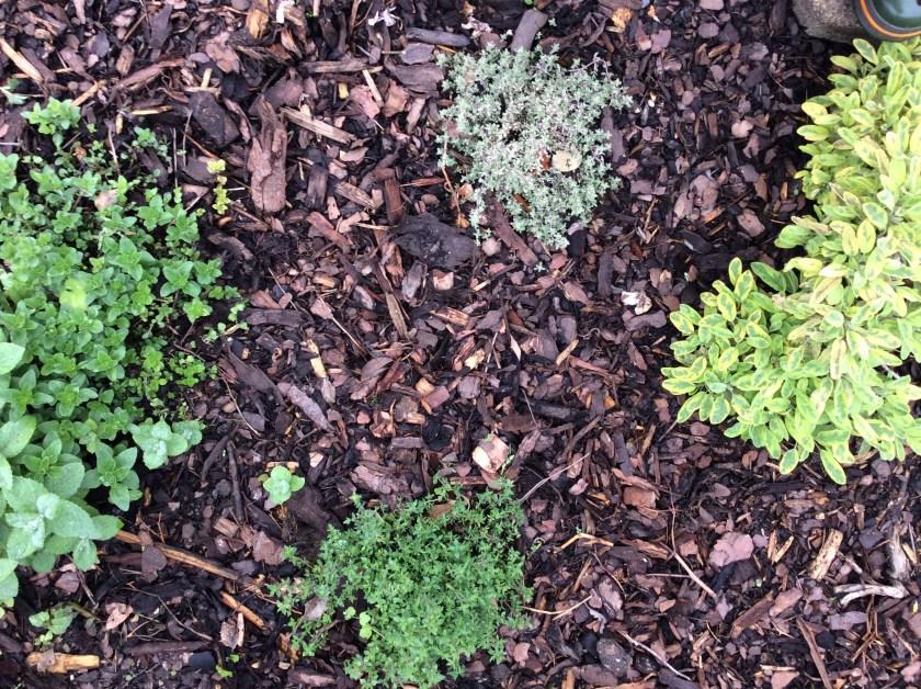 Rig humus af jord, kompost og møg