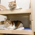 IKEA の人形用ベッドで、猫用2段ベッド