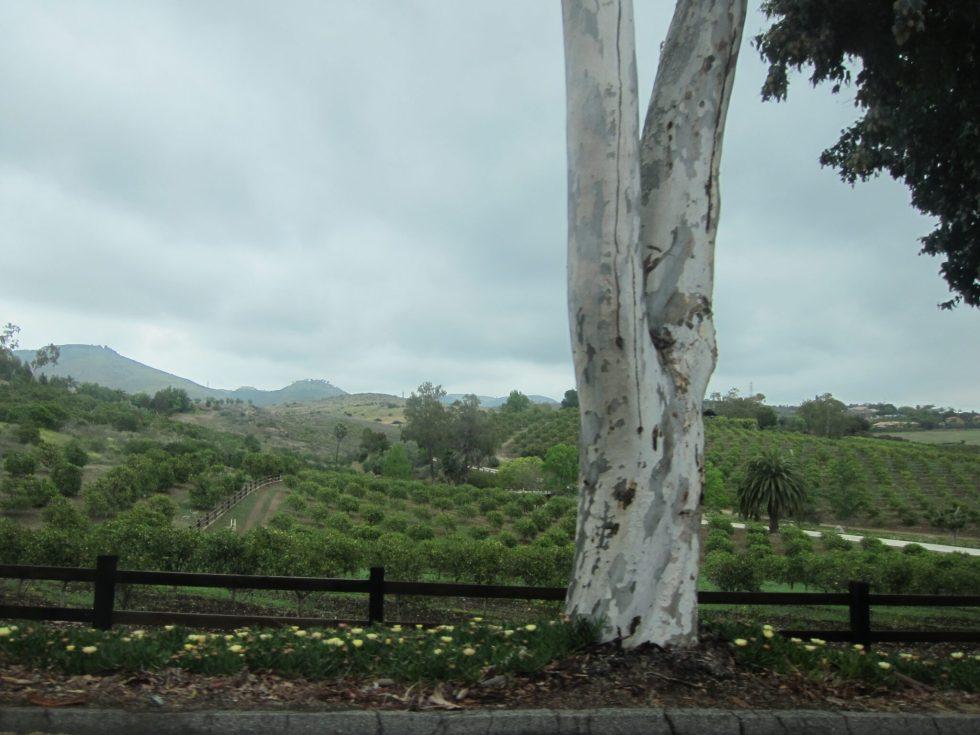 RSF landscape