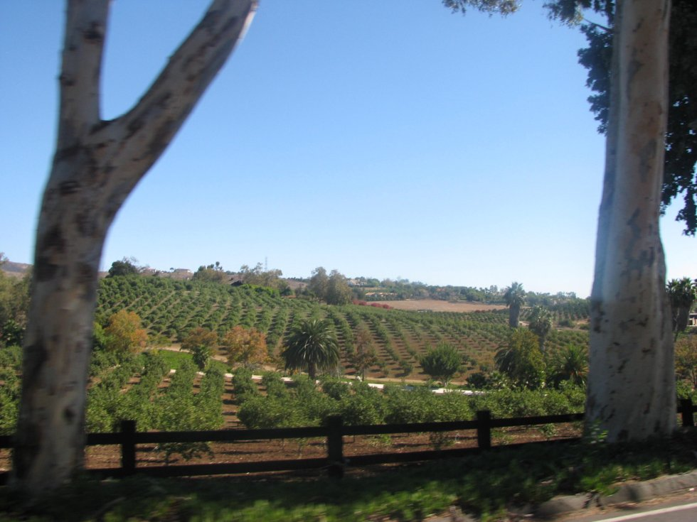 Rancho Santa Fe citrus groves