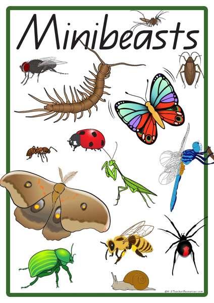 Minibeasts Vocabulary Words