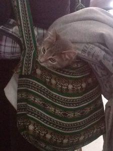 K in Motion Travel Blog. Ecuador, Rumichaca border Bag Cat