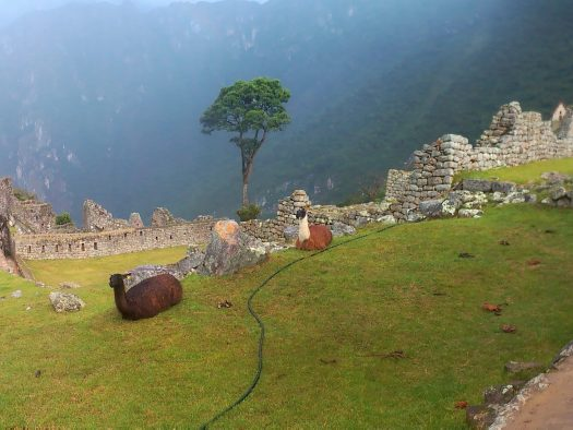 K in Motion Travel Blog. Adventures In Southern Peru. Llamas Hanging out at Machu Picchu, in the Andes, Peru