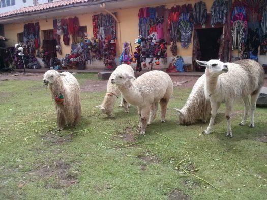 K in Motion Travel Blog. Adventures In Southern Peru. Alpacas Andean Mountain Town of Cusco, Cuzco Peru