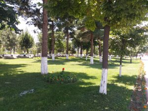 K in Motion Travel Blog. Unbelievable Uzbekistan. Green Spot With Painted Trees