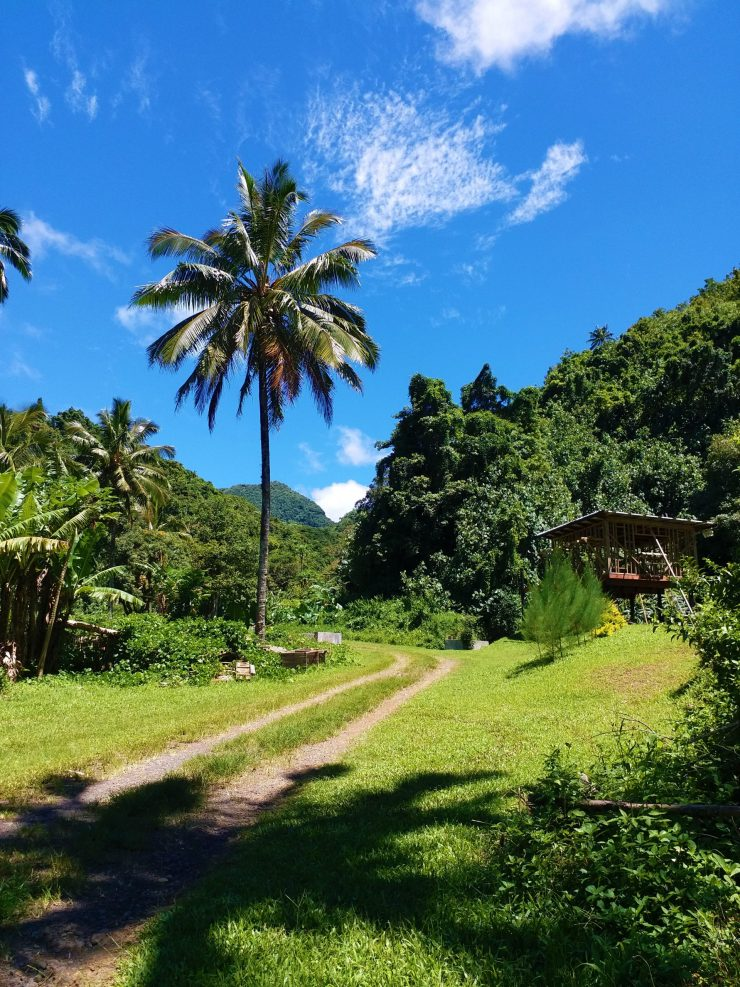 K in Motion Travel Blog. The Captivating Cook Islands. Narrowing Trail On The Cross Island Walk