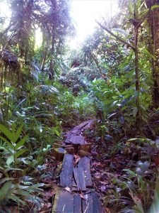 K in Motion Travel Blog. The Untouched Pacific Paradise of Palau. Log Forest Trail on the Way to the Ngardmau Waterfall