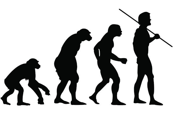人類の進化論と薄毛について   ケイマリインターナショナル株式會社