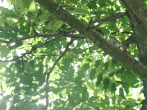公園で撮ったセミの写真