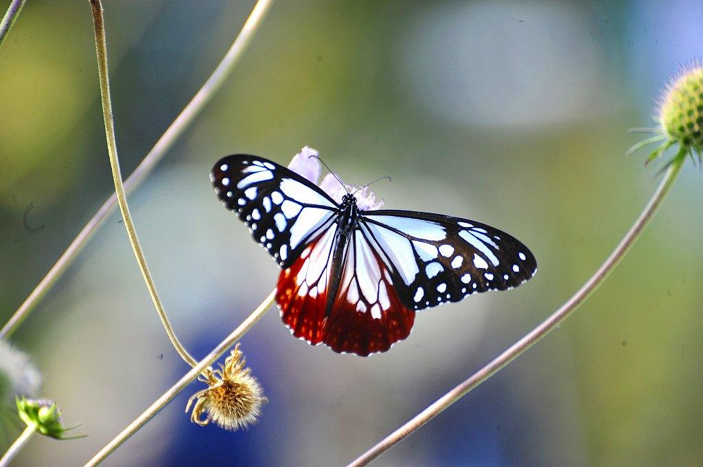 花蝶風月: ケンさんの探鳥記