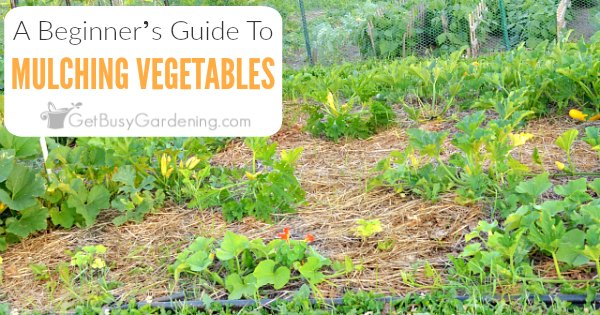 Beginner S Guide To Mulching A Vegetable Garden Get Busy Gardening