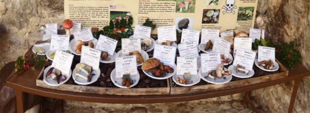 Exposition de champignons dans l'un des plus beaux villages de France. Une passionnées qui allait les chercher tous les matins.