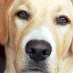 Participate in the Animal Ownership Interaction Study